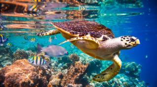 Tropski Maldivi