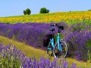 S kolesom po Provansi 4 dni