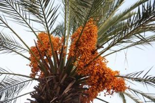 Safari po poteh Ali Babe in Počitnice na Djerbi