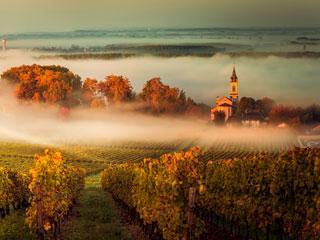 Vino, morje & ostrige - Bordeaux z letalom